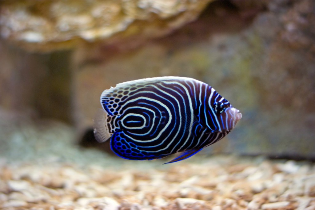 tropical_fish_petgeekery1